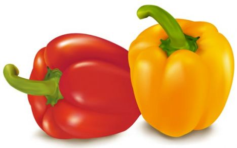 Vegetable pepper vector