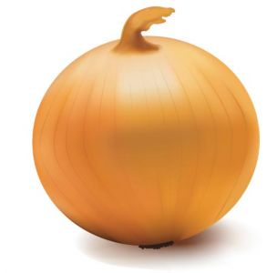 Vegetable onion vector