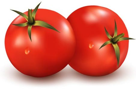 Vegetable tomato vector