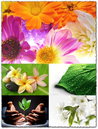 5 flowers wallpapers design