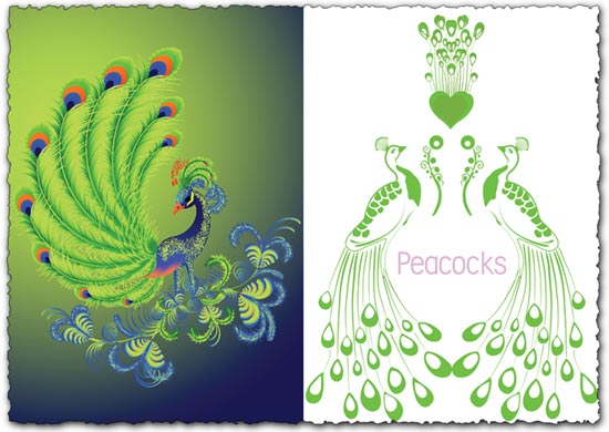 Peacock Vector EPS