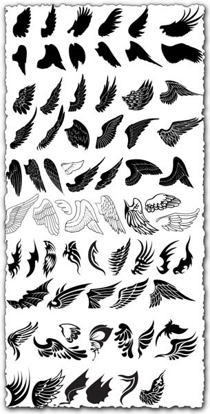 Wings design in vector format