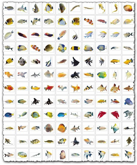 Fish images collection
