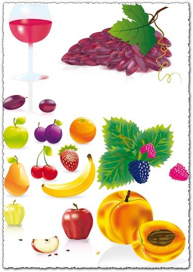 Juicy fruit vectors