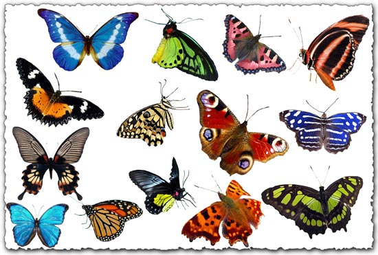 Photoshop butterflies collection