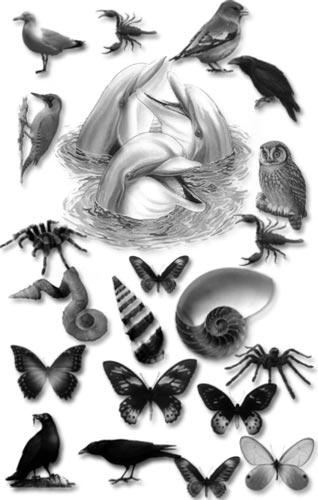 Animal brushes for Photoshop