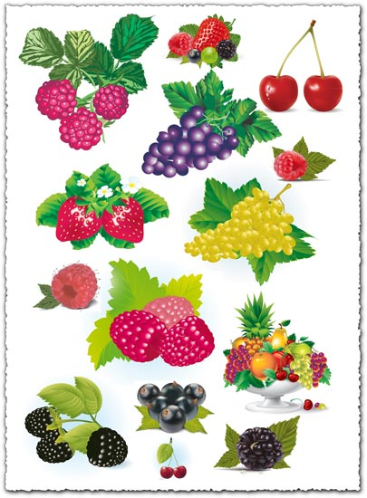 Berries collection vectors