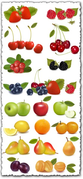 Fresh fruits and berries vectors