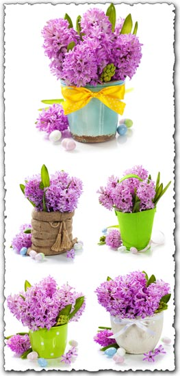 Purple hyacinths in creative baskets