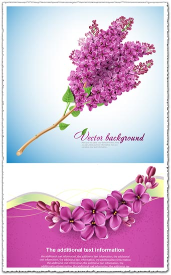 Lilac flower vector card