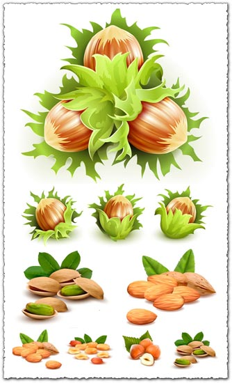 Green filbert nuts vectors