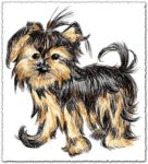 Hand drawn vector Shih Tzu