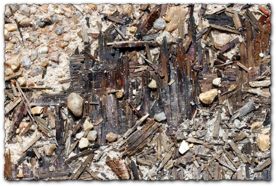 Decayed wood in dirt texture