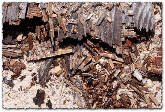 Wood in dirt texture template