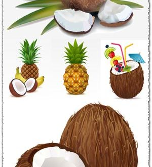 Exotic fruits high detailed vector