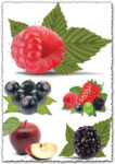 Fruits and berries vectors