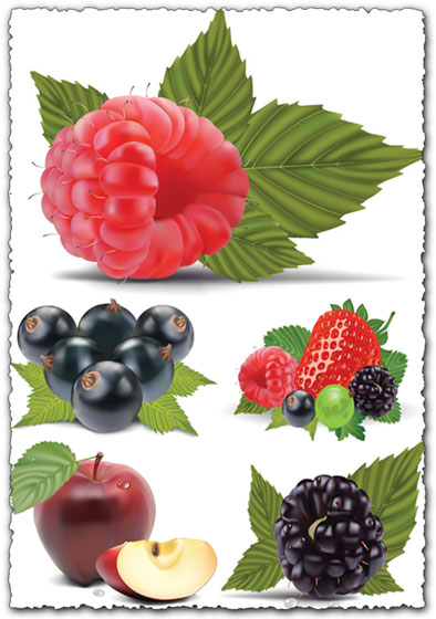 Fruit vector with berries and apples