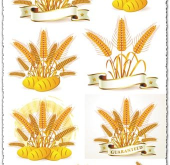 Golden wheat vectors