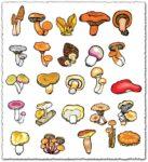 Mushroom types vector plants