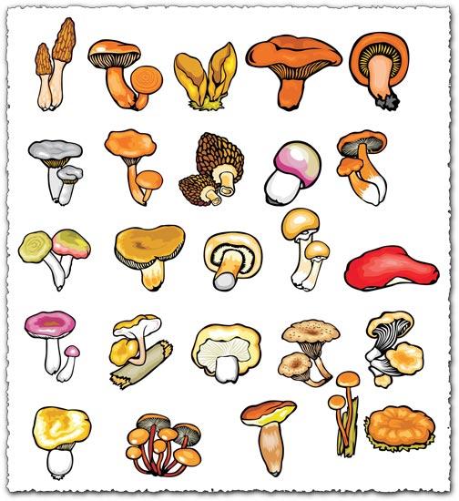 Mushroom vector drawing