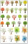 Ornamental trees vector illustrations