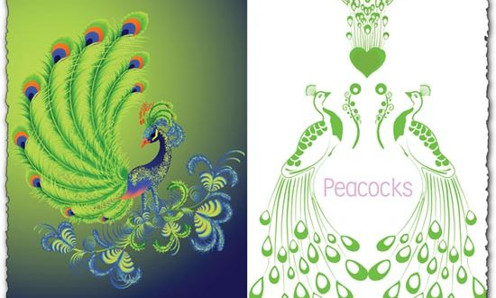 Peacock vector design
