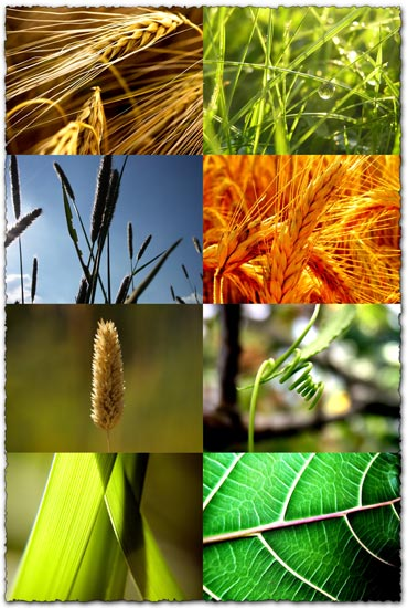 Plants and nature wallpapers
