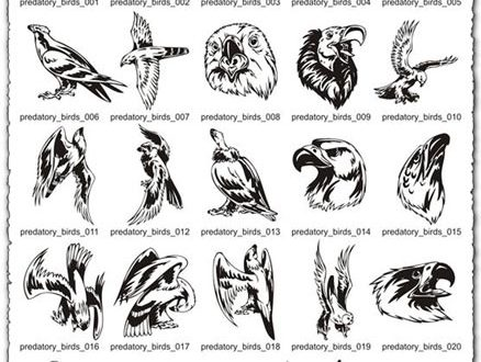 Predatory Birds Vector EPS