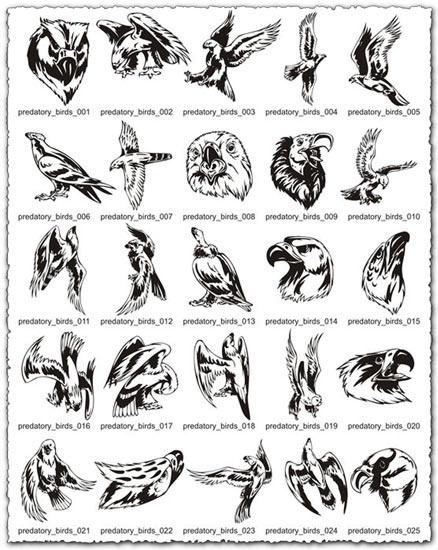 Predatory Birds Vector EPS