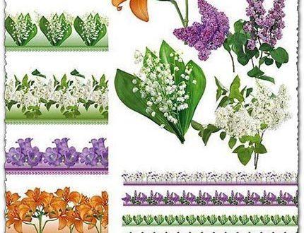 Psd floral border frames