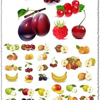 Realistic fruits vectors