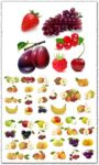 Realistic fruits vectors