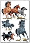 Running horses vector illustrations