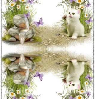 Transparent photo frame with cute kitten