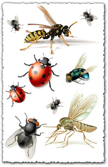 Vector insects design